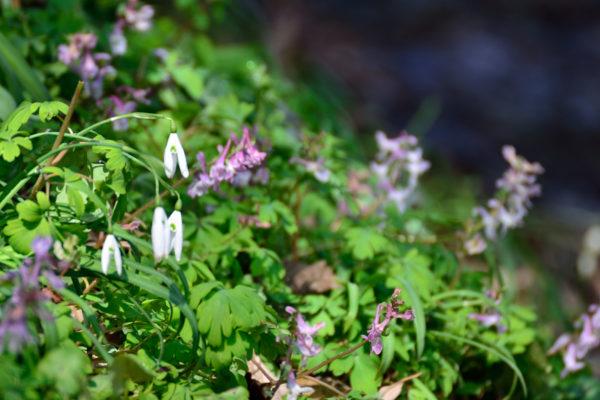 primavera sui Colli Berici