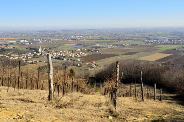 Collina di Mossano