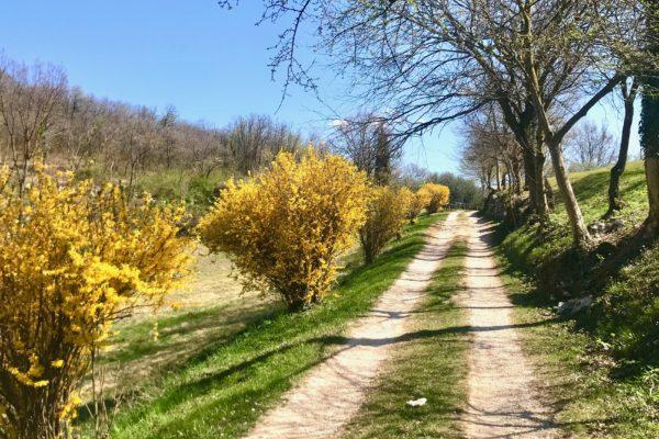 sentiero sopra Pozzolo