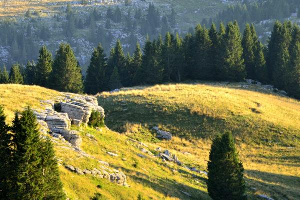 Rosso Ammmonitico sul Monte Fior