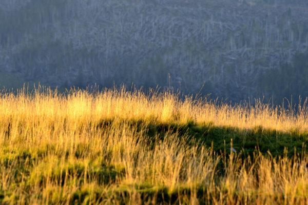 erba al tramonto
