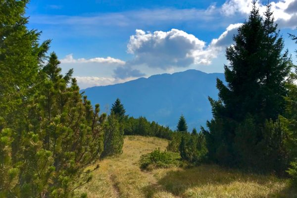 sentiero per cima Larici