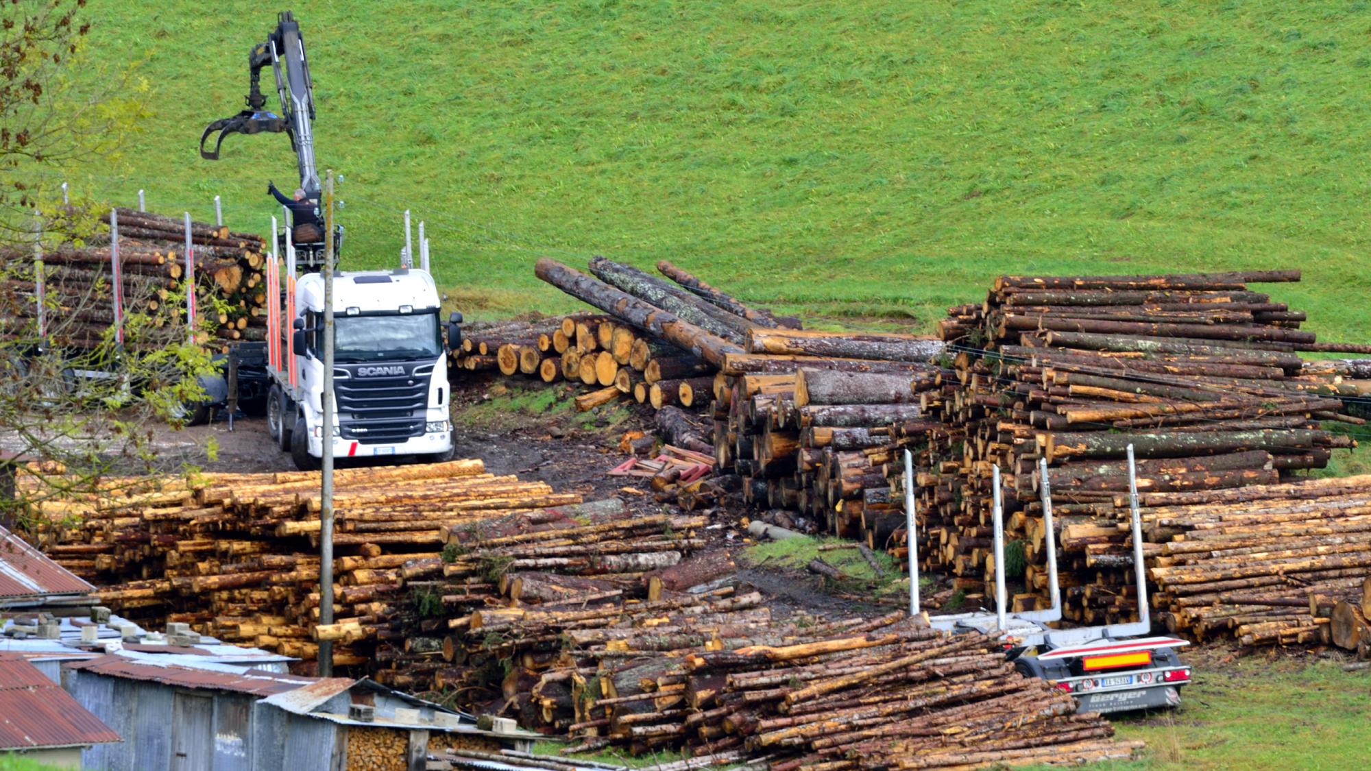 Camion che raccoglie tronchi di alberi