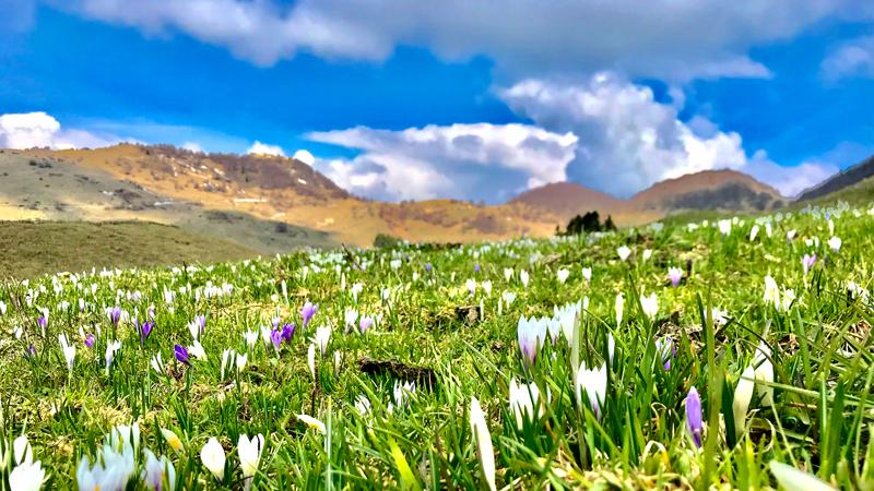 Primavera sul Monte Novegno