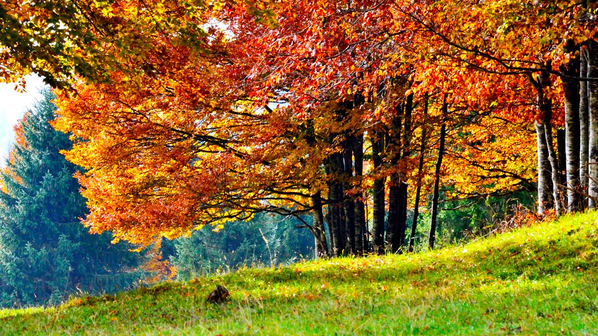 foliage in Valbella