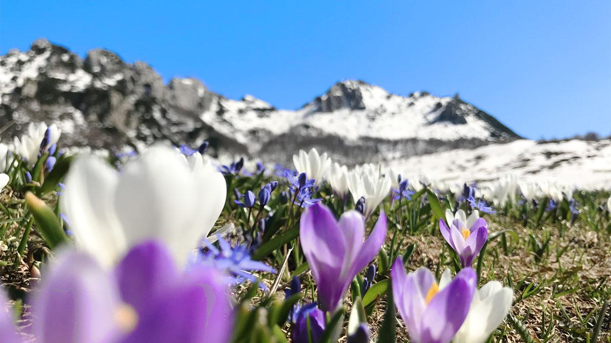 fioriture in Piccole Dolomiti