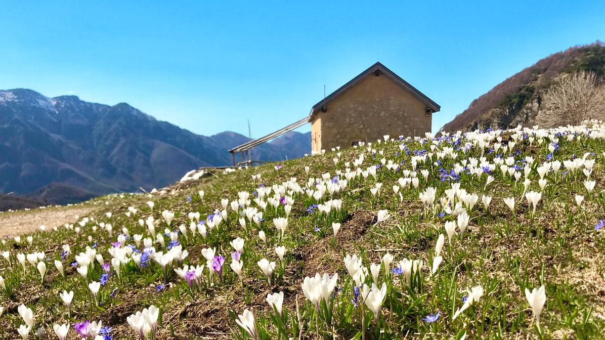 primavera a Campogrosso